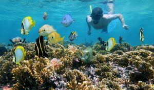 Man snorkeling blue water