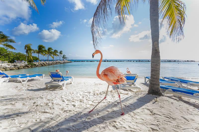 Flamingo's in Aruba