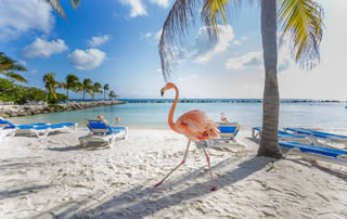 flamingo on the beach in Aruba