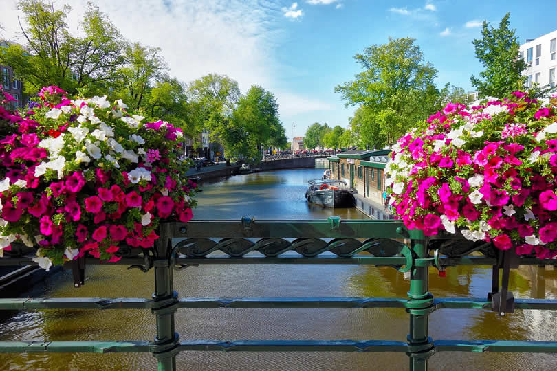 Colorful flowers on bridge Amsterdam canal